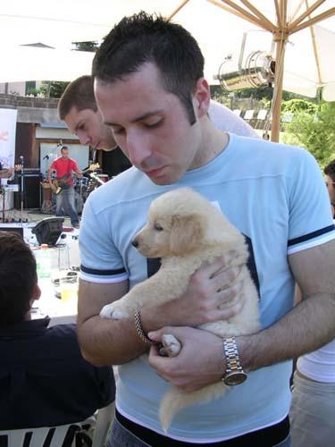 Uno dei cuccioli in cerca di padrone